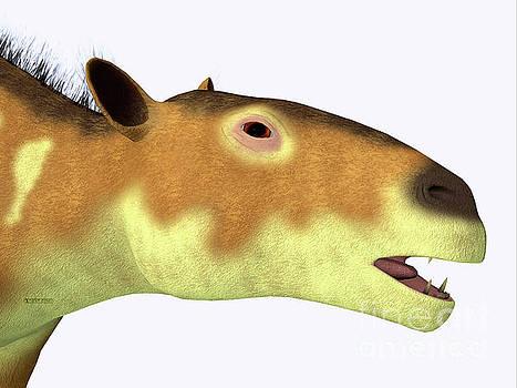 Corey Ford - Eurohippus Horse Head
