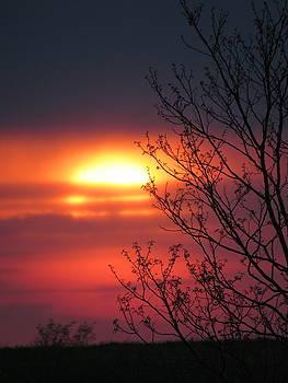 Evening Sun by Mandy Byrd