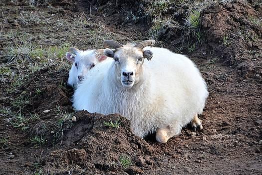 Ewe and lamb by Norman Burnham
