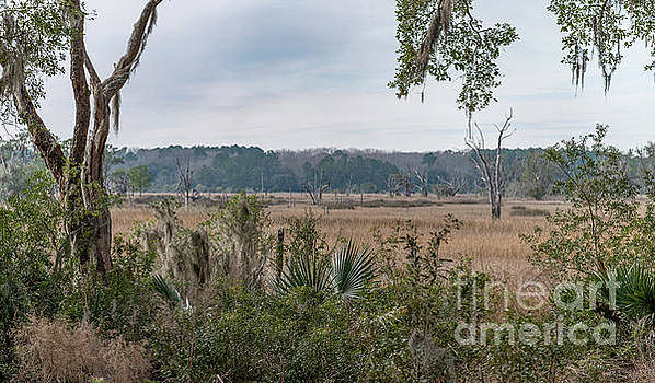 Expansive Salt Marsh View by Dale Powell