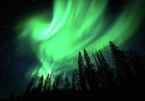 Explosion of Green by John Wilkinson