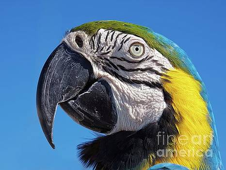 Tatiana Travelways - Eye contact - Colorful parrot