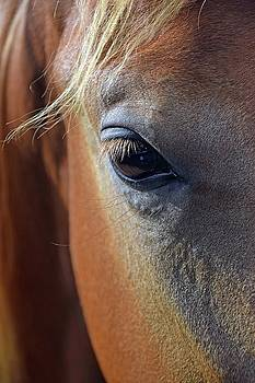 Eye Of The Horse by Sandi OReilly