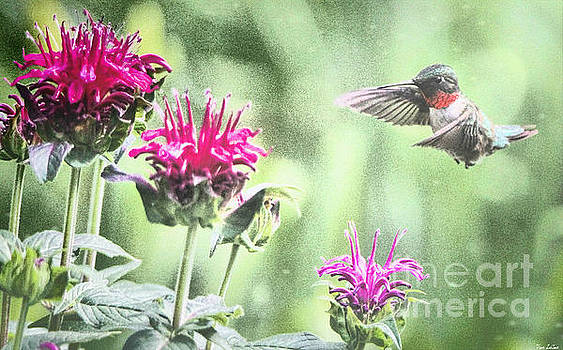 Eyeing The Bee Balm by Tina LeCour