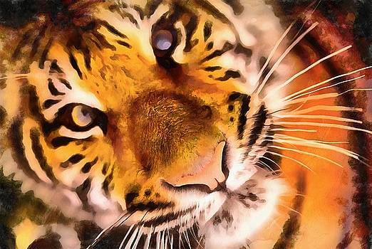 Eyes of the Tiger by Harry Warrick