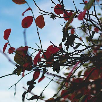 Faded Fall by Christine Buckley