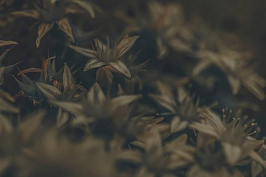 Faded Roadside Flowers by Bruce Davis