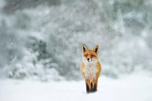 Fairytale Fox Series - Fox in a Blizzard by Roeselien Raimond