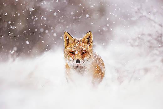 Fairytale Fox Series - Silent Fox in a Snowy Scene by Roeselien Raimond
