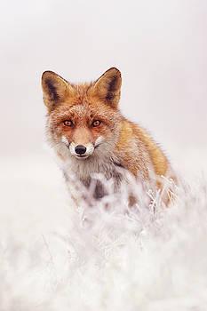 Fairytale Fox Series - The Elusive Dog Fox by Roeselien Raimond
