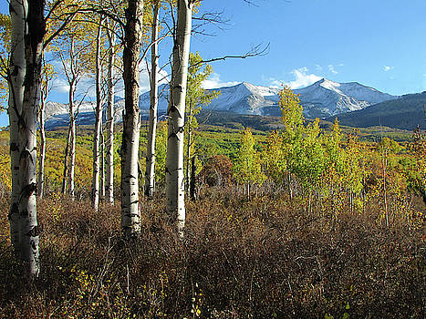 Fall At East Beckwith Mountian by Carol Milisen