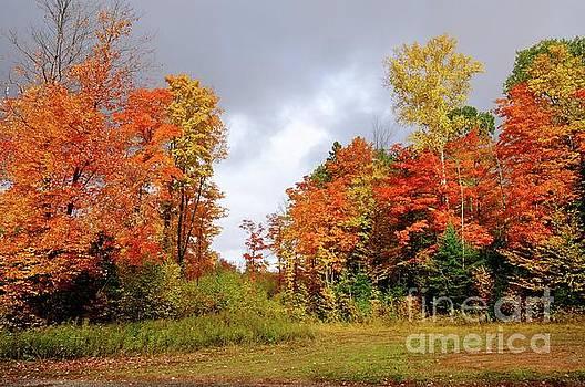 Fall Beauty by Sandra Updyke
