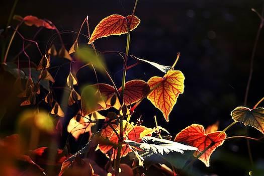 Fall beauty by Valerie Dauce