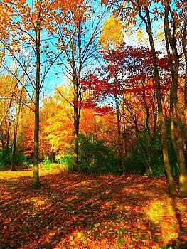 Fall Beauty by Vijay Sharon Govender