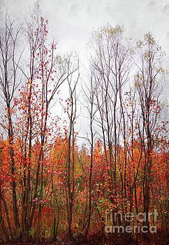 Fall Break by Margaret Koc