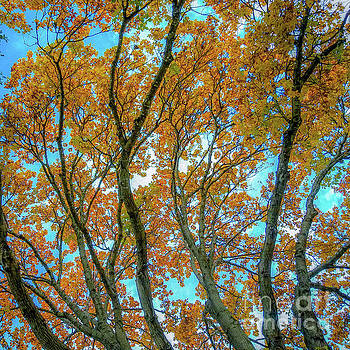 Fall Colors  by D Davila