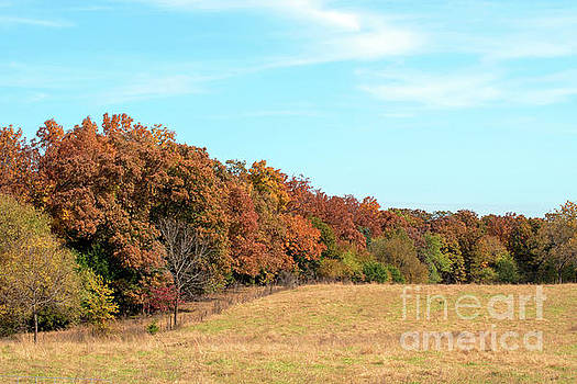 Fall colors by Diane Friend