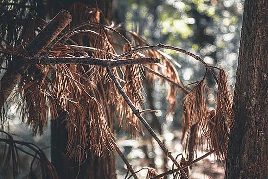 Fall Crisp by Bruce Davis