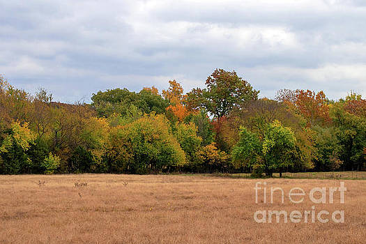 Fall Field by Diane Friend