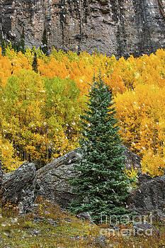 Fall Flakes by Susan Warren