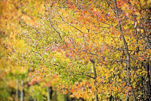 Fall Focus by Denise Bush
