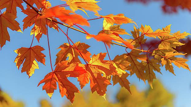 Fall Foliage by Dheeraj Mutha
