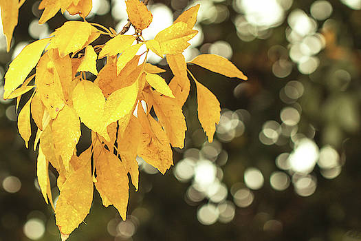 Fall gold by Vanessa Thomas