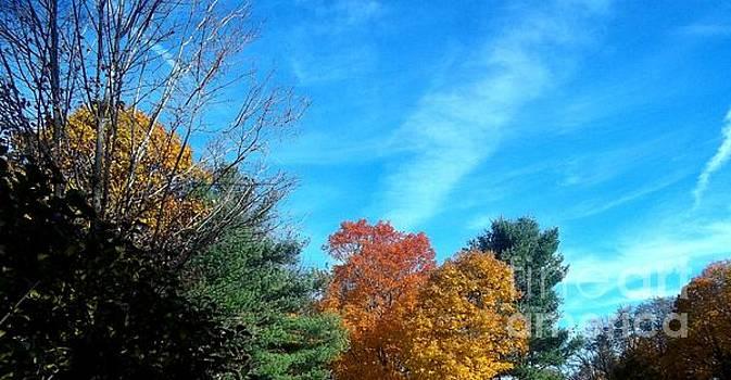 John LaCroix - Fall in New York
