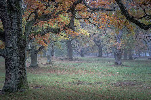 Fall in the Oak Pasture by Ludwig Riml