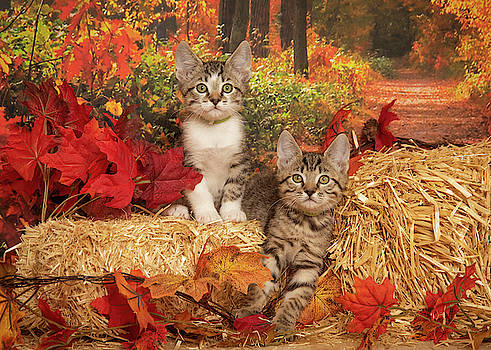 Fall Kittens by Janis Knight
