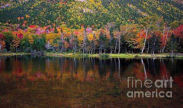 Fall leaves by Beth Jacobs