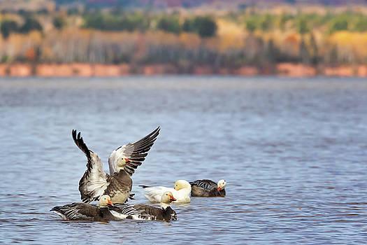 Susan Rissi Tregoning - Fall Migration at Whittlesey Creek