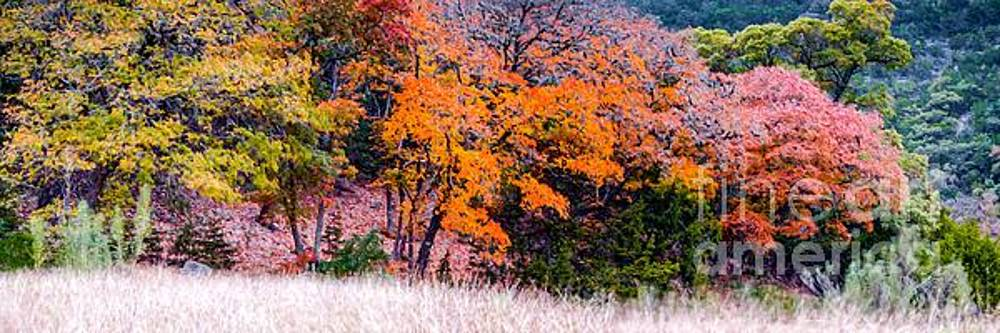 Fall Panorama of Changing Bigtooth Maples at Lost Maples State Natural Area - Texas Hill Country by Silvio Ligutti