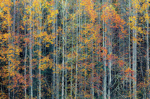 Fall Patterns Pisgah Forest by Donnie Whitaker