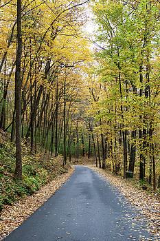 Fall Road by John Daly