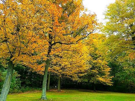 Fall Trees by Vijay Sharon Govender