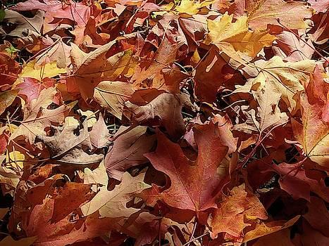 Fallen Leaves in Autumn by Julie Harrington