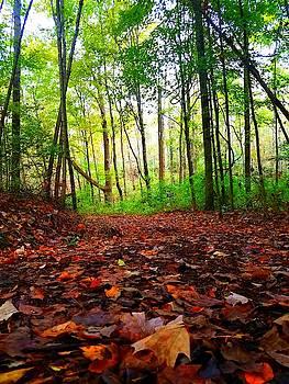 Fallen Leaves by Vijay Sharon Govender