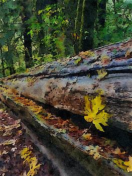 Bonnie Bruno - Fallen Tree