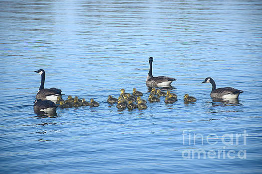 Family Swimming by Kathy M Krause