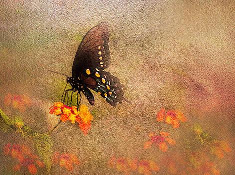 Fancy Butterfly by Leticia Latocki