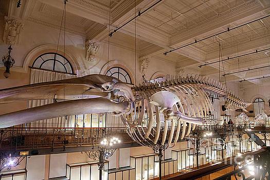 Wayne Moran - Fantastic Beasts at the Oceanographic Museum of Monaco Jacques Cousteau Museum