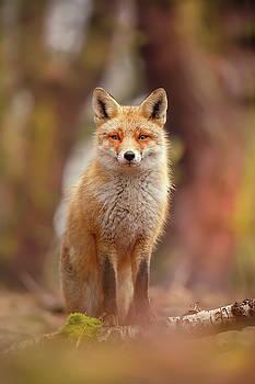 Fantastic Mrs. Fox by Roeselien Raimond