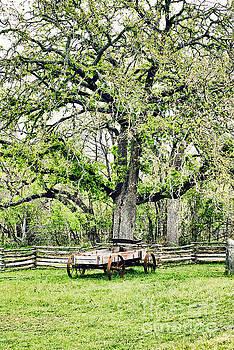 Farm Life by Gary Richards