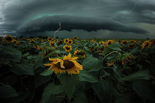 Fear Inoculum  by Aaron J Groen