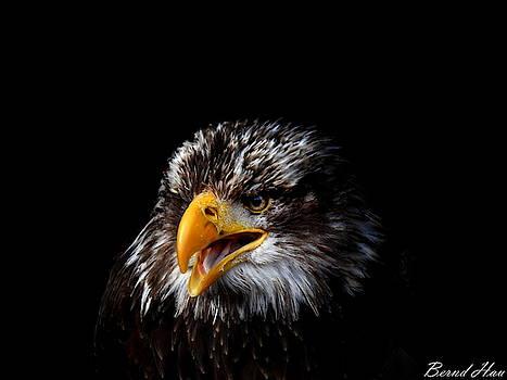 Fearless by Bernd Hau