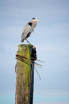 Tom Trimbath - Feathered