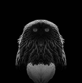 Pelo Blanco Photo - Featherhead