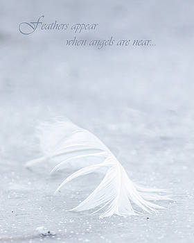 Feathers Appear by Holly Ross