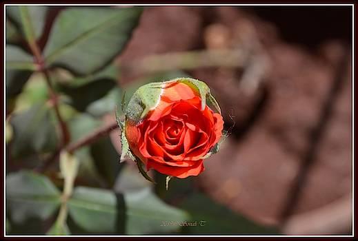 February Bloom by Sonali Gangane